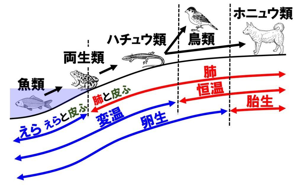 脊椎動物の分類と進化