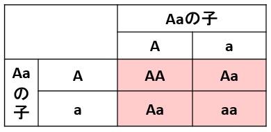 遺伝の掛け合わせ表