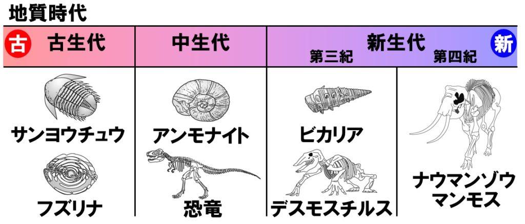 示準化石の種類