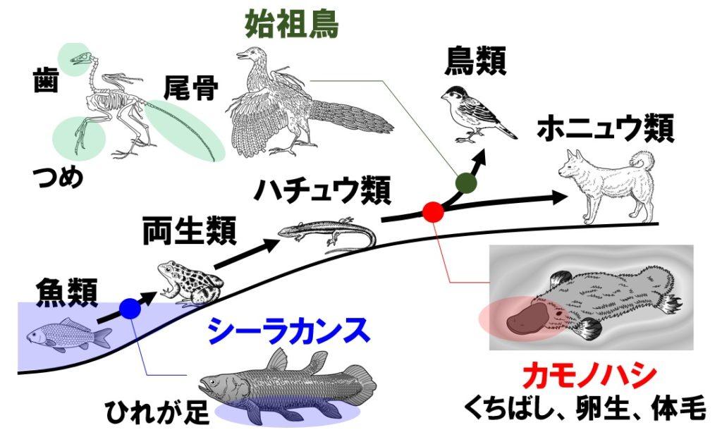 進化の過程の生物