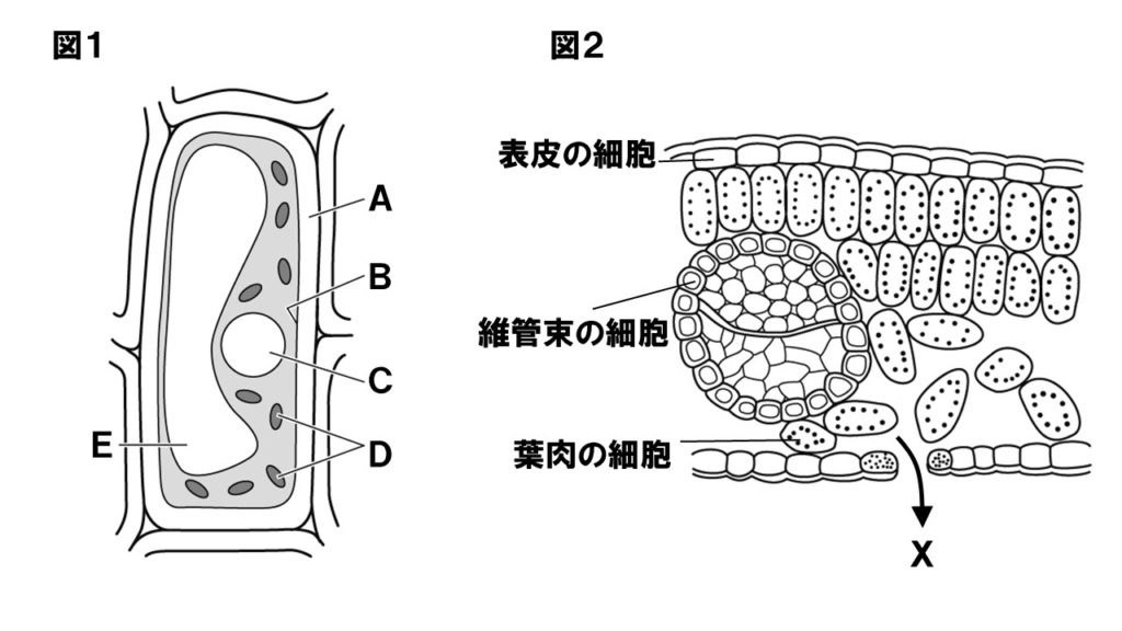 細胞・細胞の呼吸