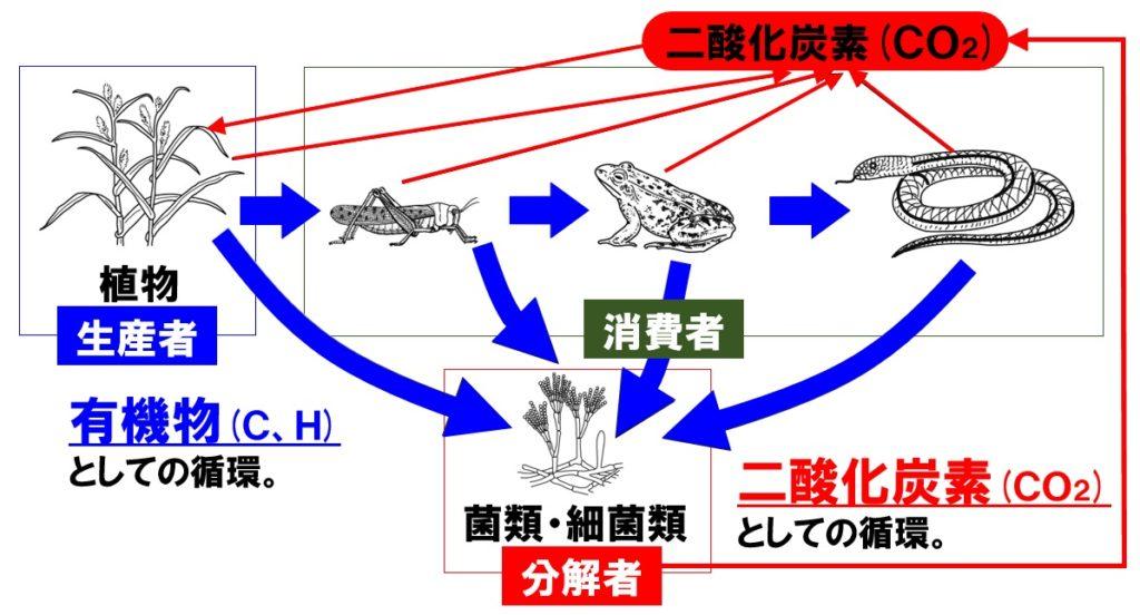 炭素の循環