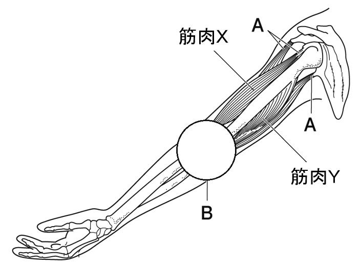 運動器官1