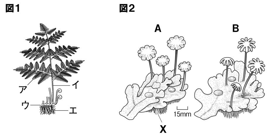 植物 定期テスト対策11