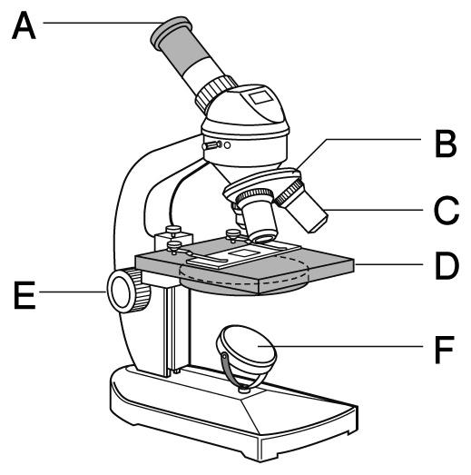植物 定期テスト対策2