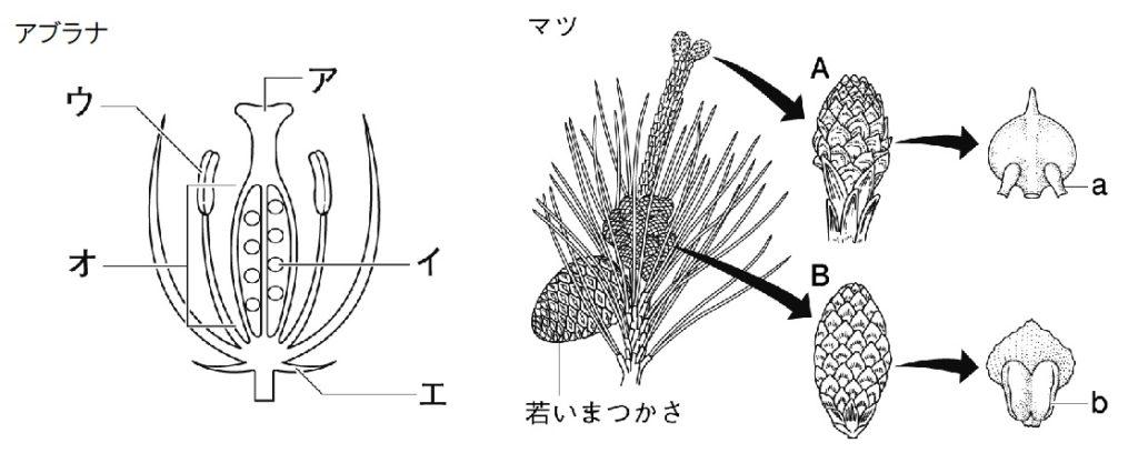 植物 定期テスト対策4