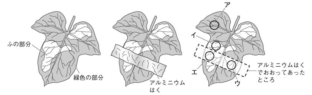 植物 定期テスト対策5