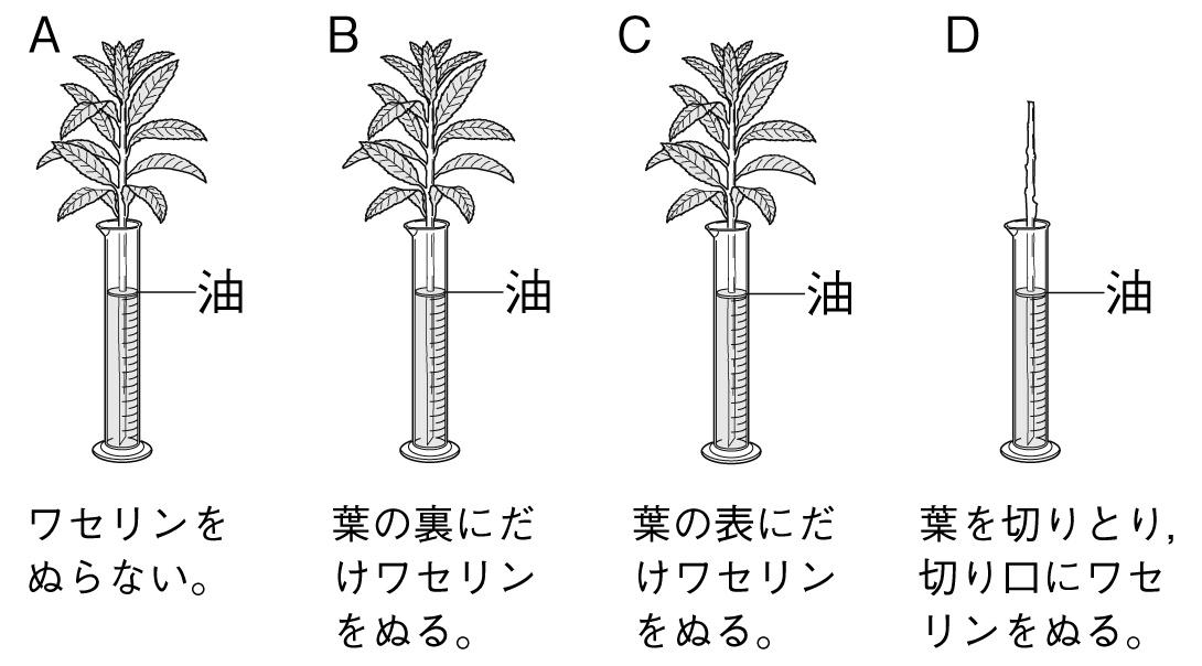 植物 定期テスト対策8