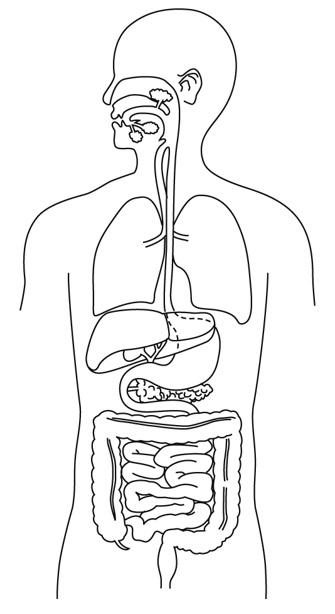 消化器官の作図