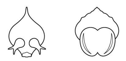 マツの花の胚珠