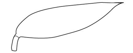 葉脈の作図