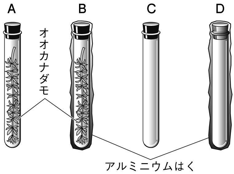 BTB溶液を使った光合成の実験